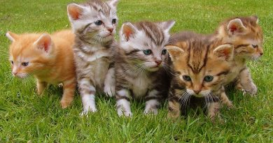 5 Reasons to throw out your dry cat food – it's bad for your cat