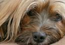Voor het eerst bewezen: je hond kan echt je emoties begrijpen