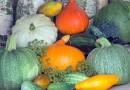 10 voedingsmiddelen die goed zijn voor je immuunsysteem