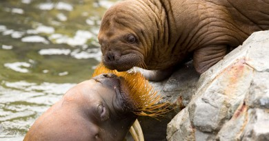 tumoren zeedieren
