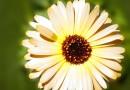 Zwitserse overheid erkent homeopathie als medische behandeling