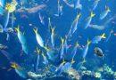 De waanzin van overbevissing helder uitgelegd in een prachtige animatie