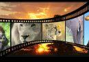 Natuurfilms maken de meest agressieve gevangenen rustig