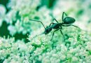 How to get rid of sugar ants naturally: 2 homemade bait recipes