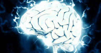 brain hallucinates