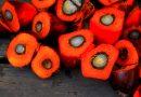 Palmolie – gezond of ongezond?