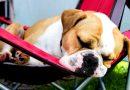 Honden kunnen soms net als wij niet slapen, omdat ze piekeren