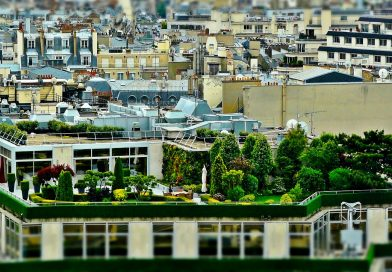 Rooftop gardening – the world is finally growing up!