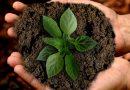 Als je planten onder narcose brengt, worden ze bewusteloos. Net als mensen
