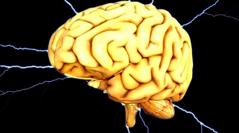 hersenen als je dood gaat