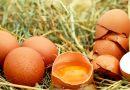 Eierschalen als bron van calcium?