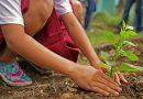 Zaadjes van hoop: Farming Hope's oplossing voor dakloosheid in San Francisco