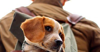 Waarom een hond een man aantrekkelijker maakt