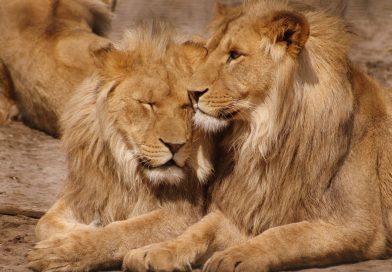 Populaties wilde dieren sinds 1970 gehalveerd