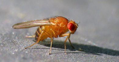 Wetenschappers bewijzen dat insecten chronische pijn voelen na verwonding