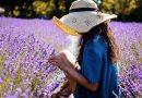 Lavendelolie maken