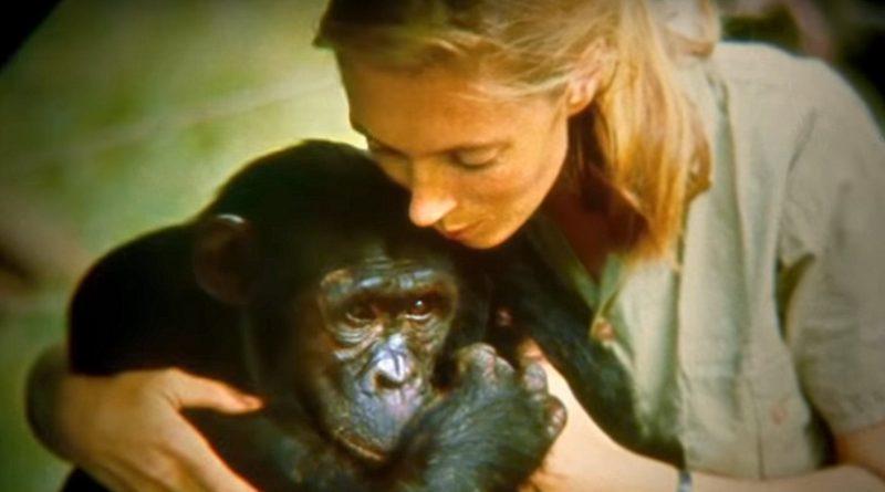 Dr. Jane Goodall's