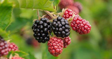 12 fruitsoorten