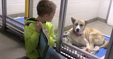 Deze kinderen lezen asielhonden voor — met verrassende voordelen voor zowel dier als kind