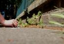 Meer dan onkruid: hoe rebelse plantkundigen stoepkrijt gebruiken om vergeten flora te benoemen