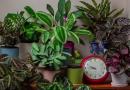 time-lapse video's planten
