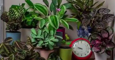 Time-lapse-video's laten zien hoeveel planten gedurende de dag bewegen