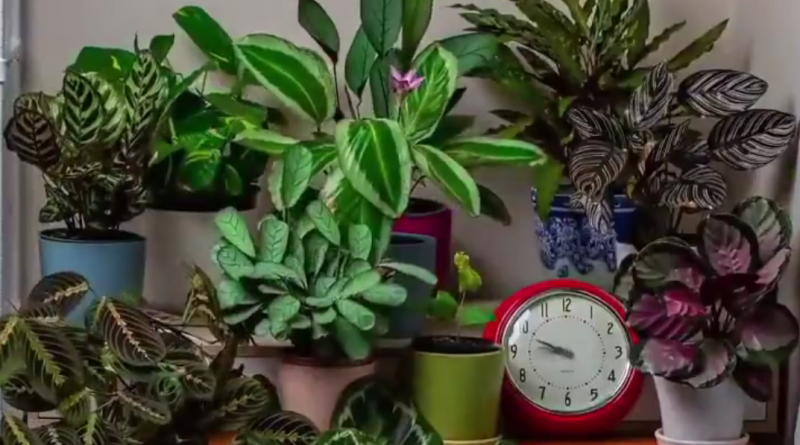 time-lapse video's planten