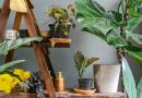 kaneel bij je planten